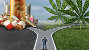 choosing the cannabis lifestyle
