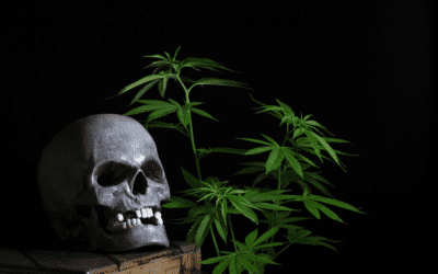 No Tricks, Only Treats: Your Guide to a Wicked Halloweed