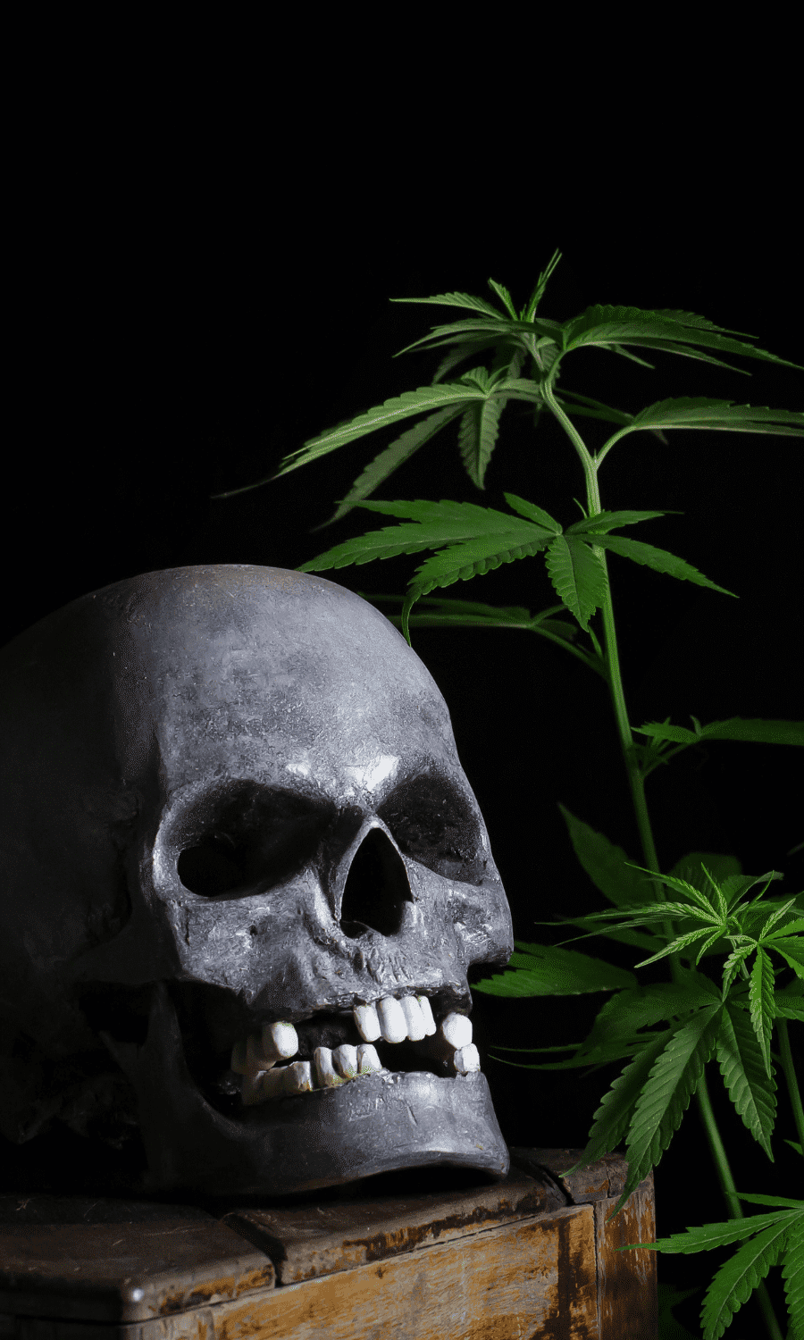 Skull with cannabis plant