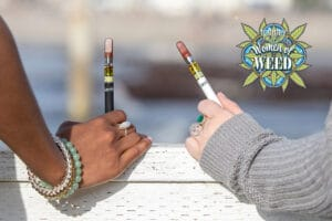 Jetty Extracts Interview