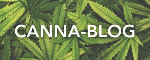 Canna-Blog
