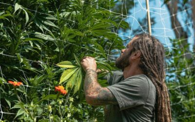 Flow Cannabis Co.'s Corporate Social Responsibility and Sustainability