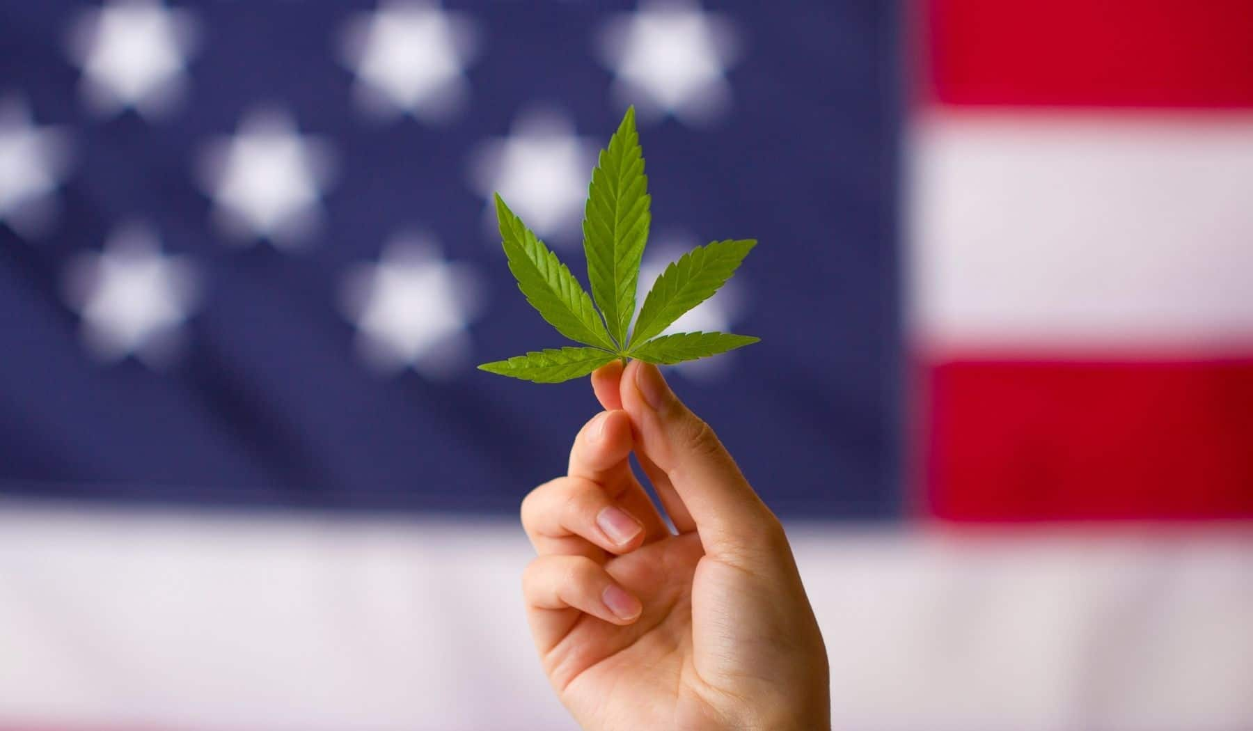Woman holding up weed leaf in front of US flag