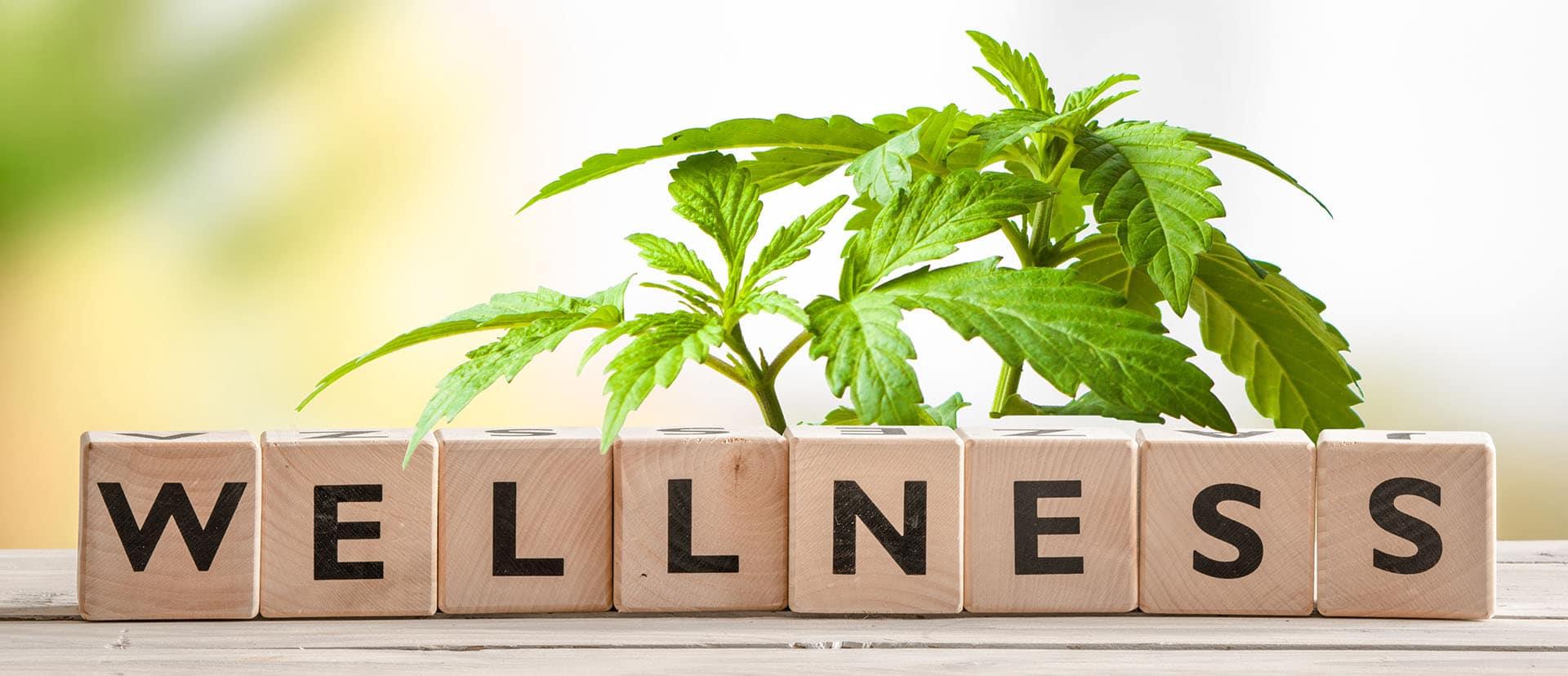 Cannabis and Wellness
